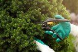 Test záhradných nožníc: Ktoré prepadli a ktoré sa osvedčili?