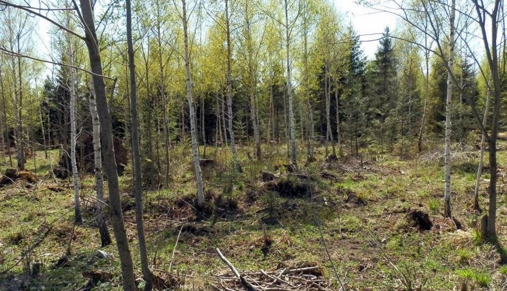 pozemky-na-ktorych-ma-vyrast-projekt-autocamping-smokovec-4