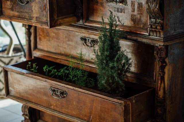 rostliny_v_interieru_7